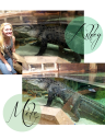 Pretty-girl-Might-mike-alligator-newport-aquarium