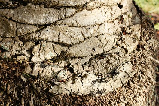 bark-on-tree