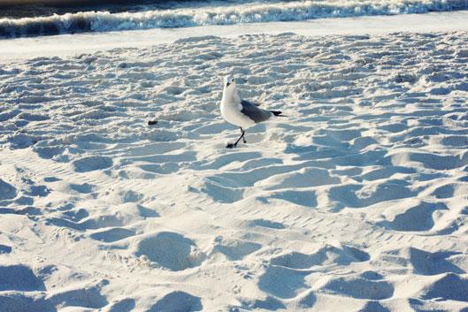 bird-on-clam-pass-beach-nap