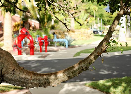 curved-limb-on-a-tree