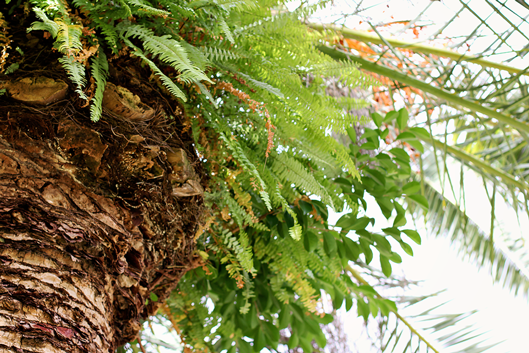 ferns-growing-out-of-palm-t