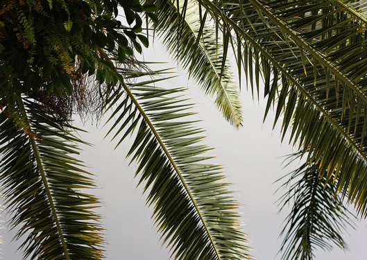 palm-leaves-with-ferns