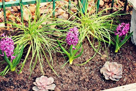 purple-flower-plants-for-ba