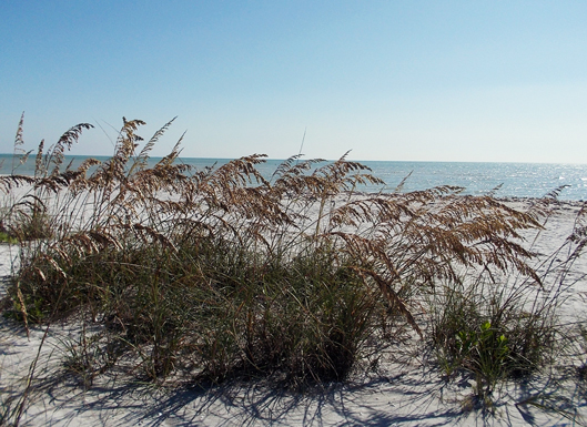 sea-oats-and-ocean-casa-ybe