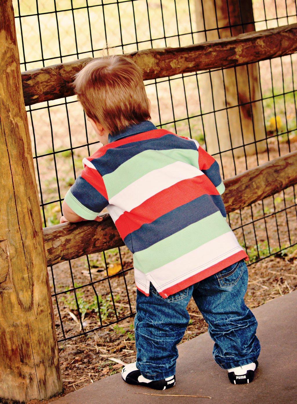 adorable-toddler-boy-at-zoo