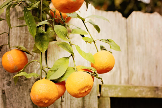 orangeg-on-limb-and-fence