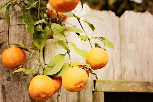 orangeg-on-limb-and-fence
