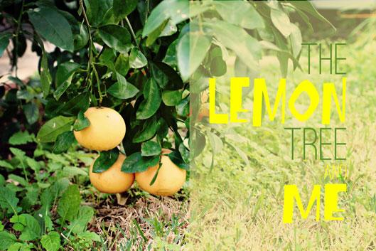 the-lemon-tree-and-me-hero-
