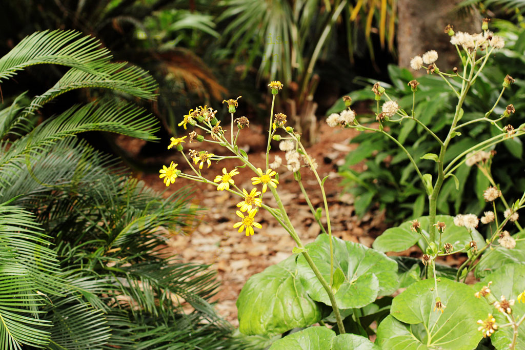 yellow-flowers-in-garden
