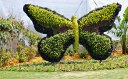 butterfly-scultured-bush-fl