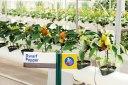 dwarf-peppers-epcot-gardens