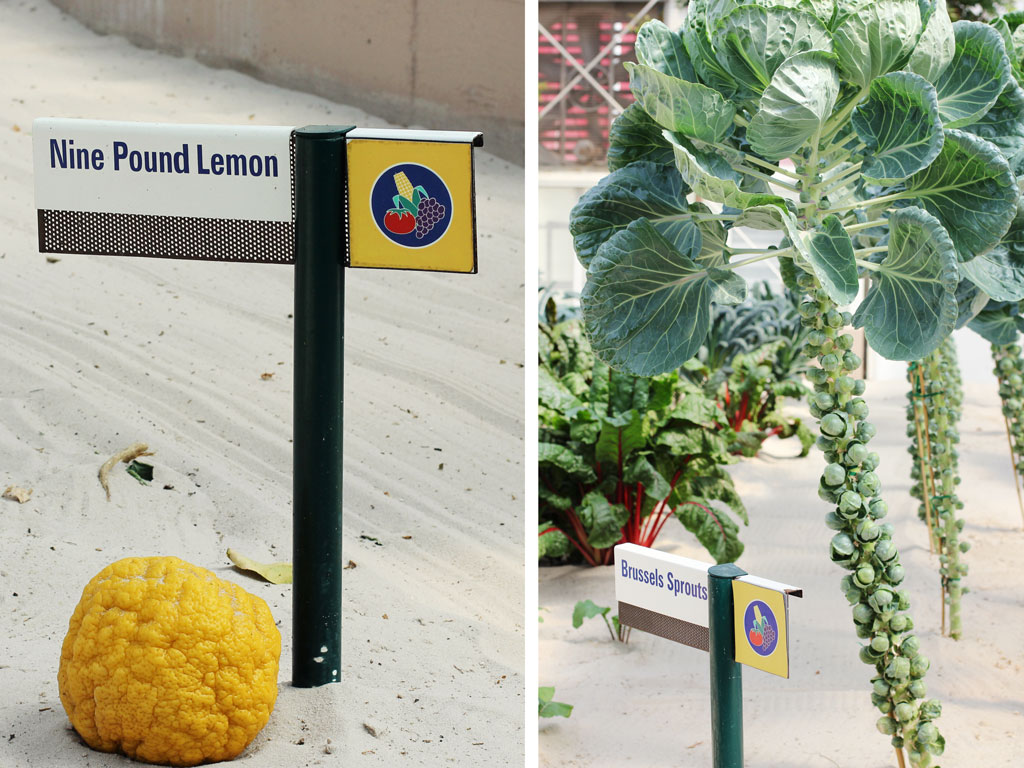 nine-pound-lemon-brussel-sp