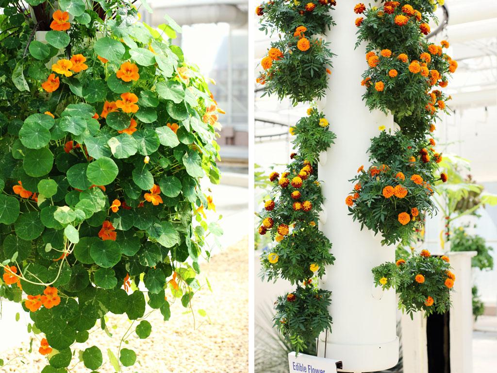 orange-flowers-epcot-garden