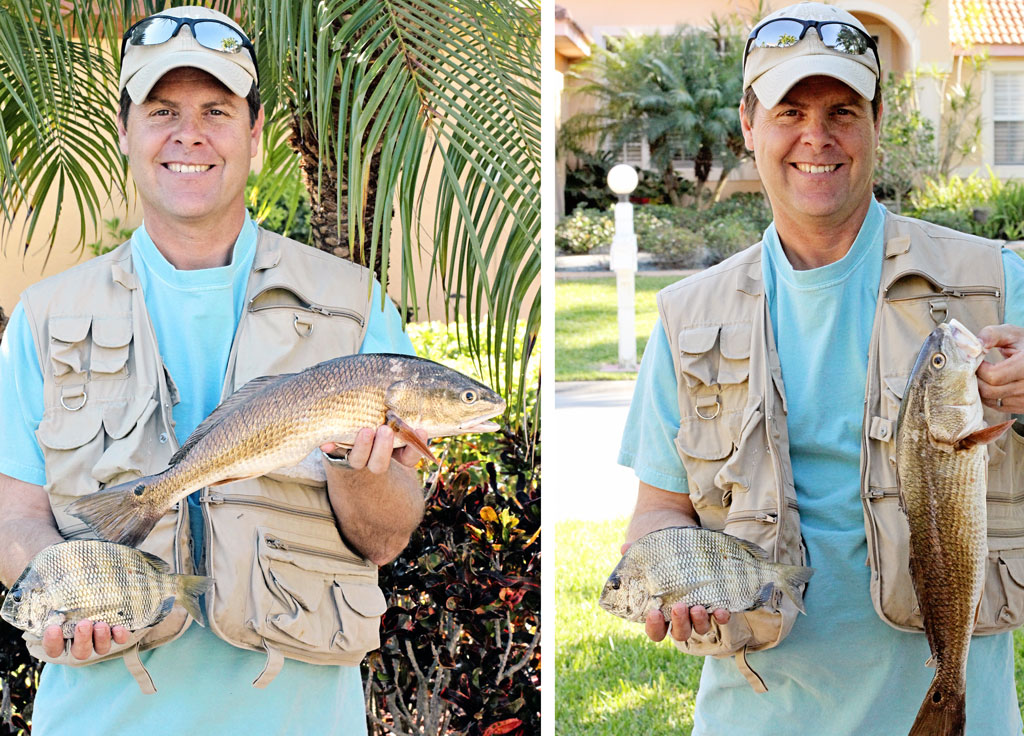 redfish-and-sheephead