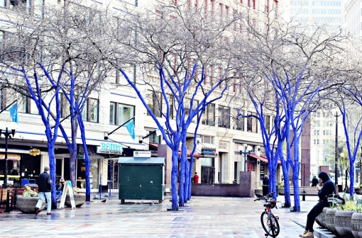 blue-trees-downtown-seattle