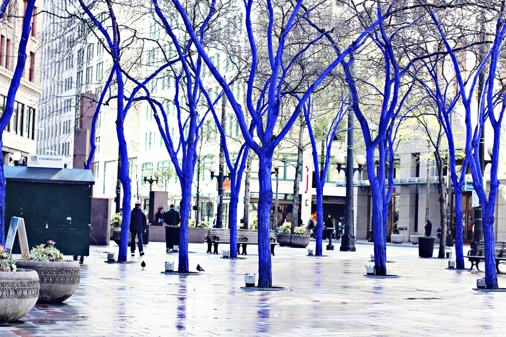 blue-trees-in-seattle