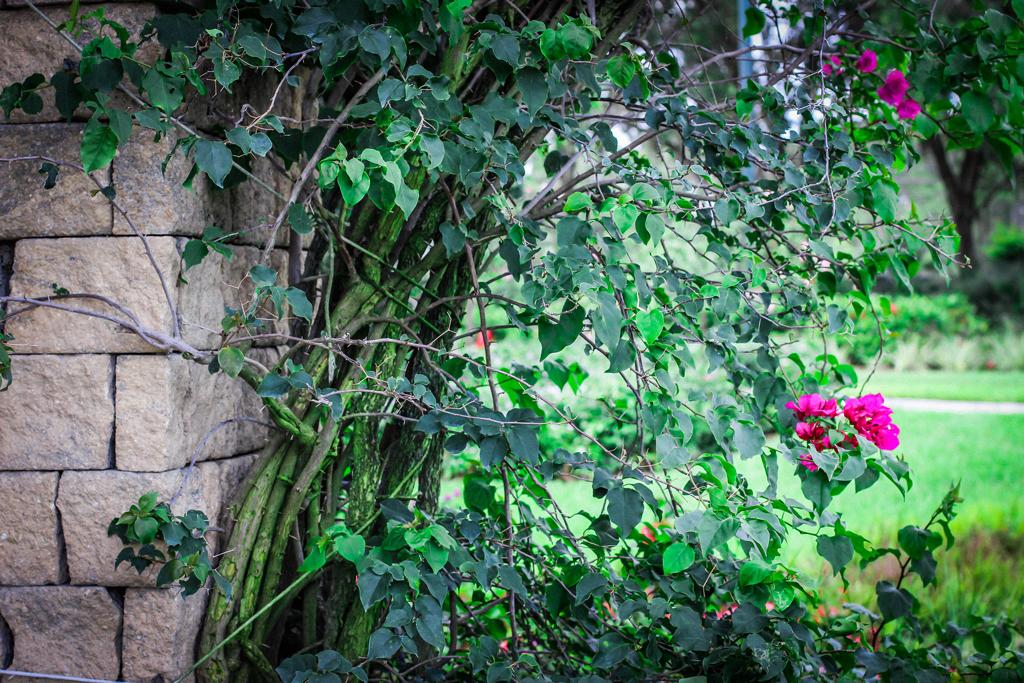 arch-archectitect-flower-garden
