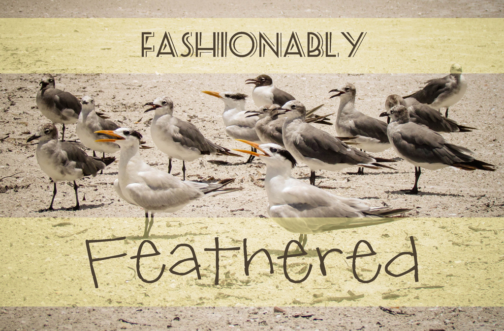 fashionably-feathered2