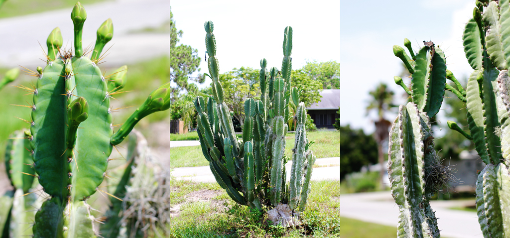 Florida-Cactus-Collage