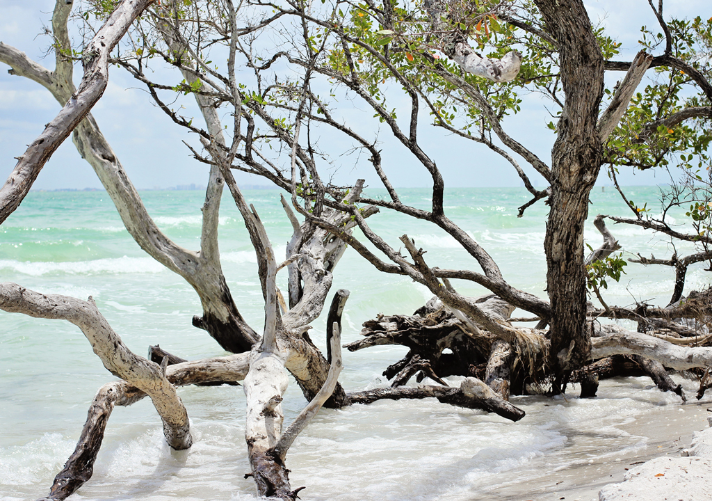 sanibel-beach-tree-art3