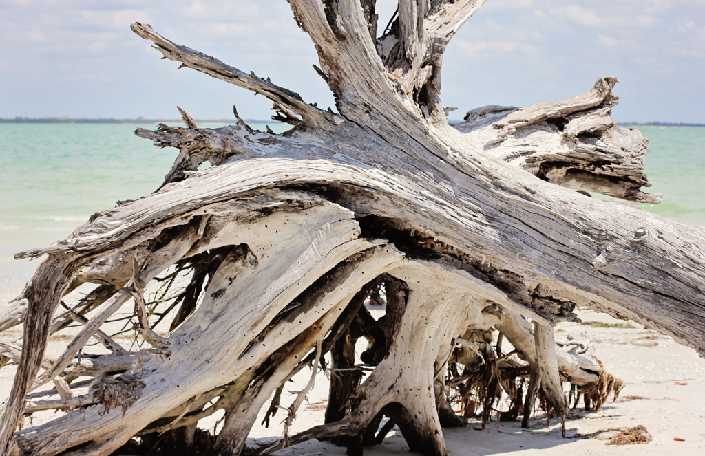 sanibel-island-florida-tree-art-on-beach