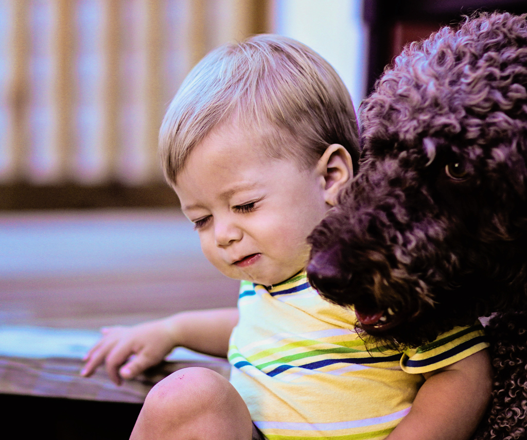 cute-toddle-baby-boy-with-giant-poodle-dog
