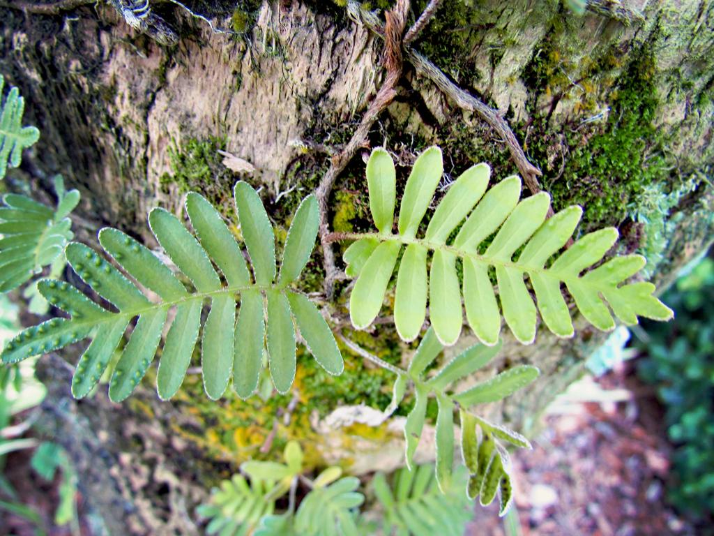 ferns-growing-on-tree