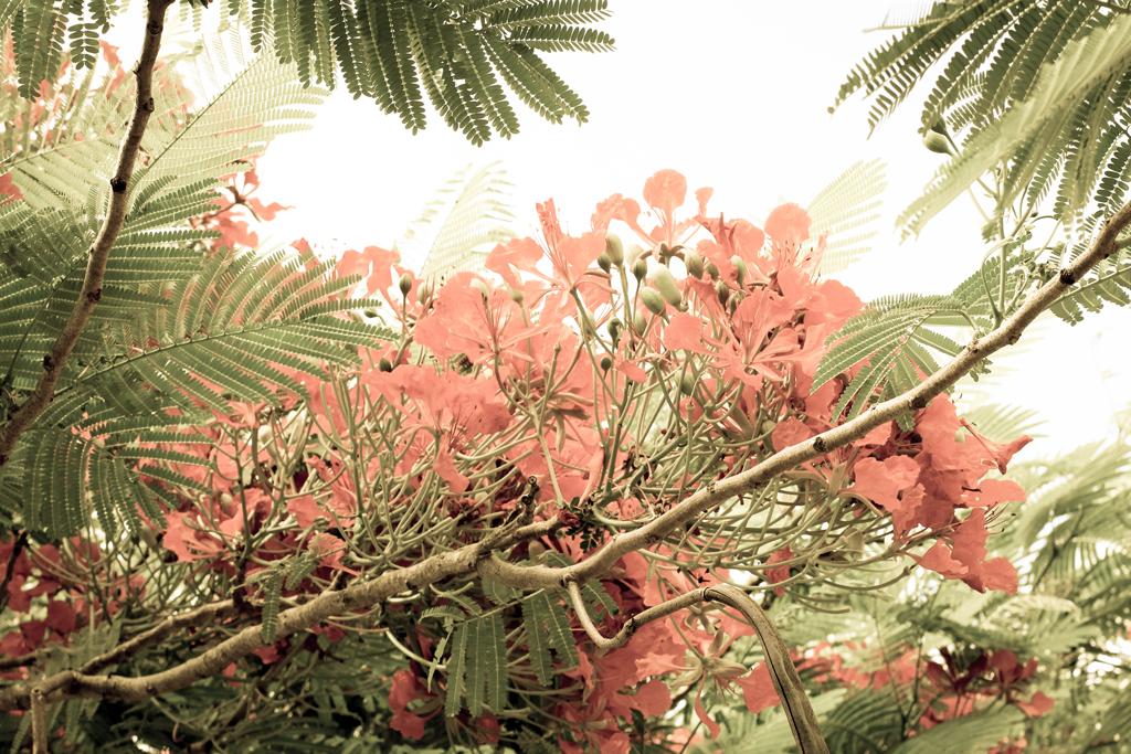 vintage-fine-art-trees-florida