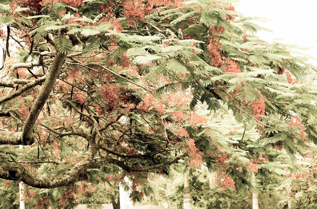vintage-trees-florida