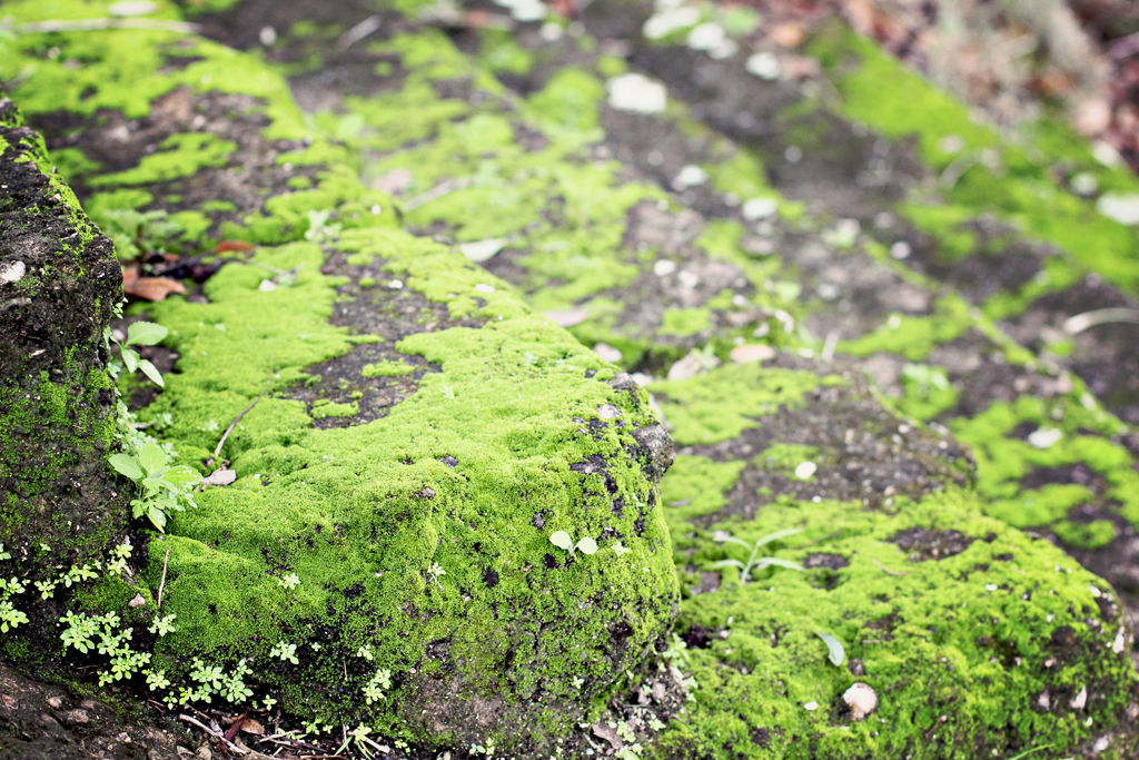 green-moss-on-cement-stairs-koreshan-community