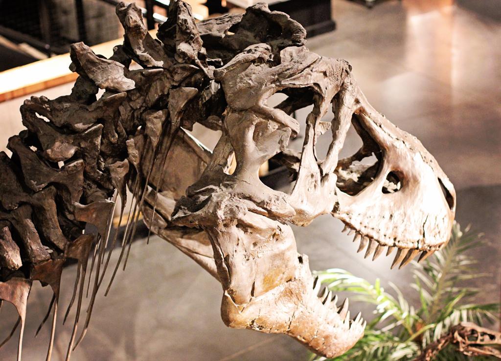 dinosaur-skellton