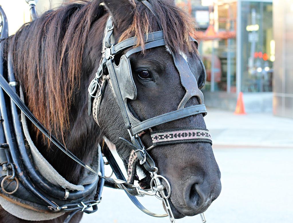 horse-carriage-hermann-park