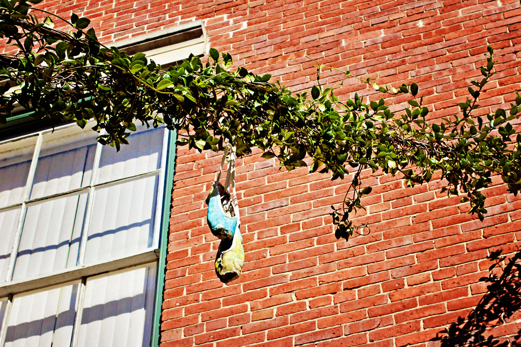 ballet-shoes-hanging-on-vine-galveston-texas