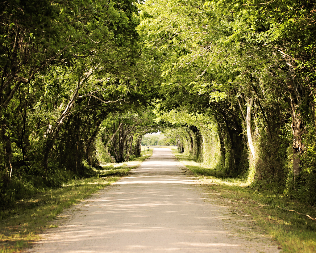 canopy-of-trees